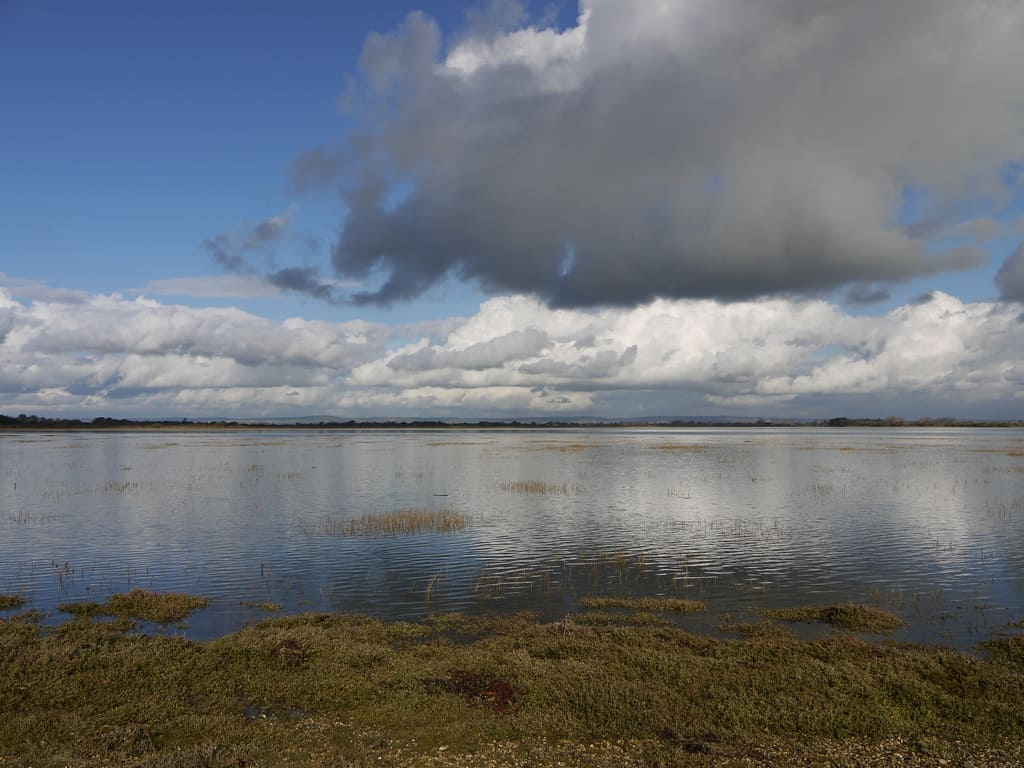 Pagham Harbour photo