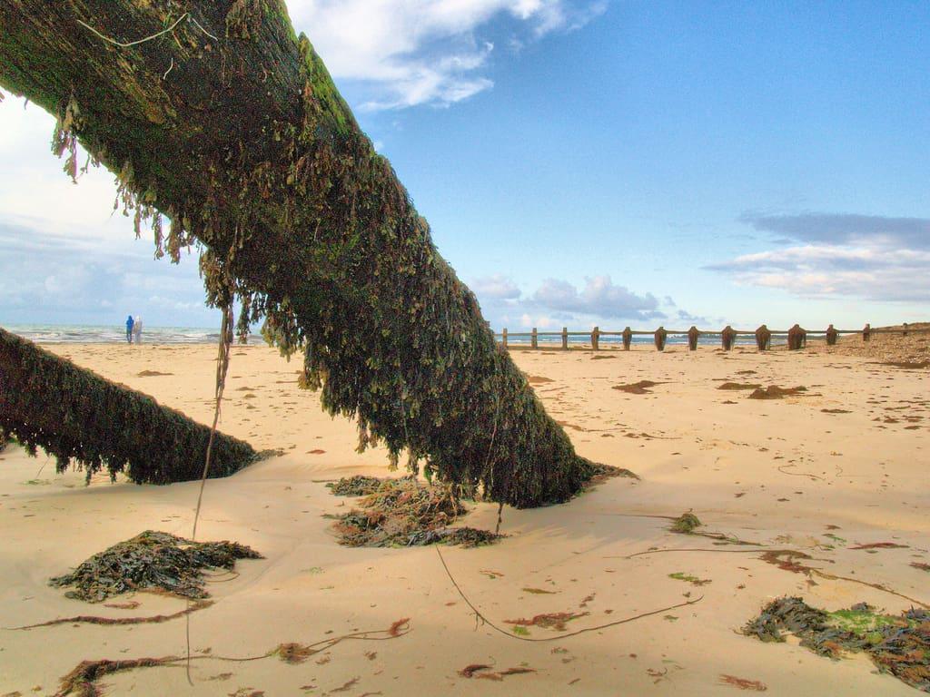 littlehampton west beach photo