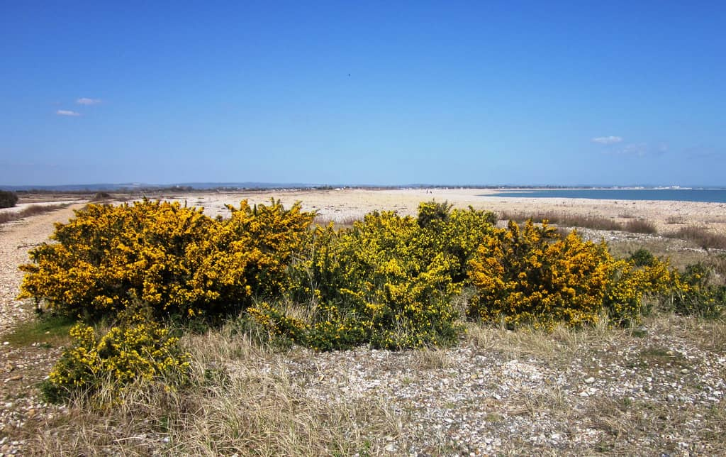 pagham harbour selsey photo