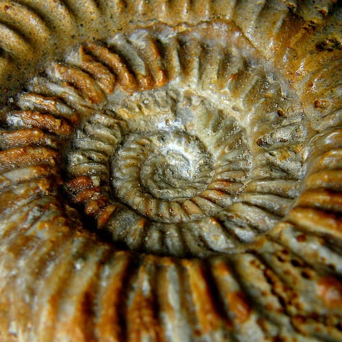 10 UK Fossil Beaches