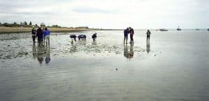 Shoebury East Beach