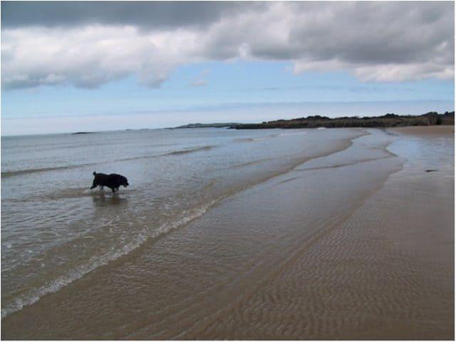 Llanfaelog-beach