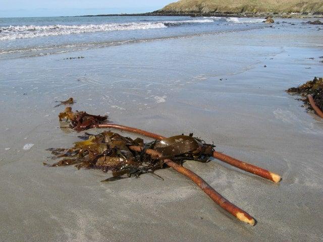 Penllech beach, Llyn Peninsula, Gwynedd