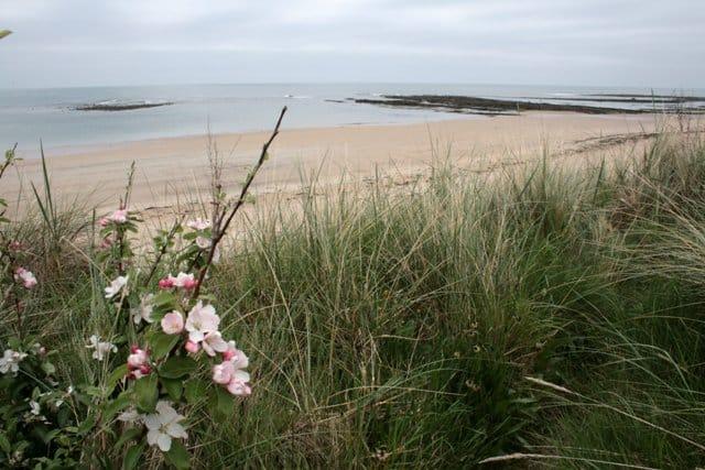 Annstead-beach