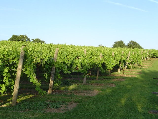 Biddenden Vineyard, Biddenden, Kent