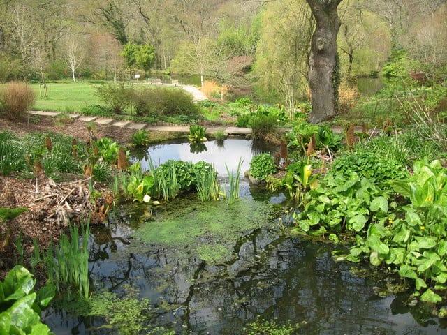 RHS-Garden-Rosemoor
