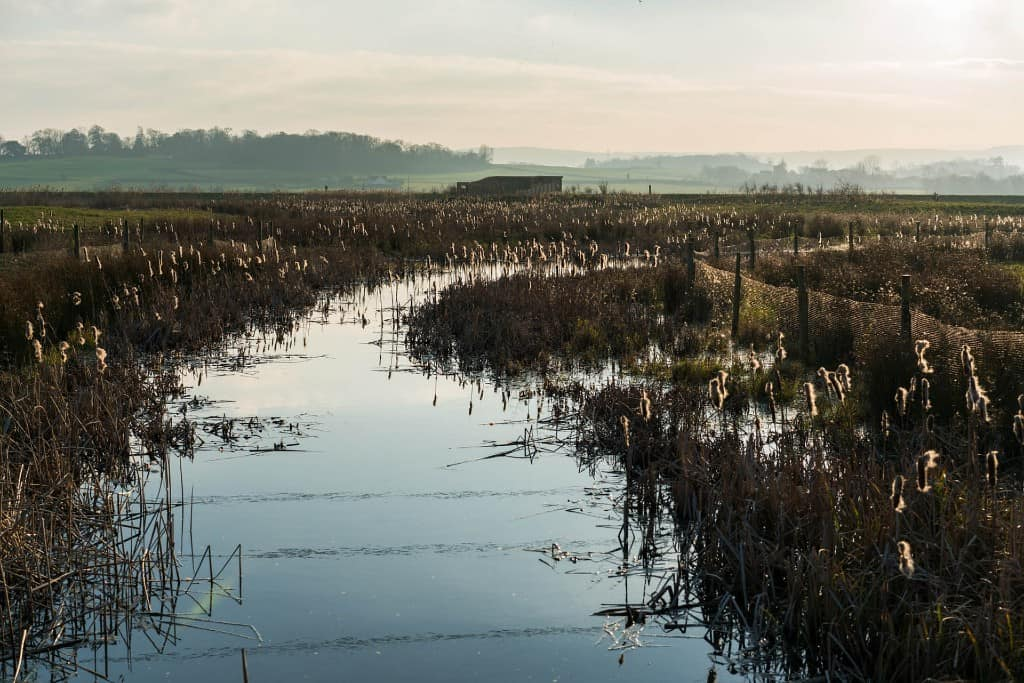 Steart-Marshes