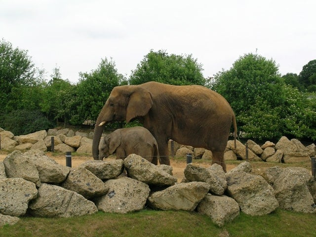 Colchester Zoo, Stanway, Colchester, Essex