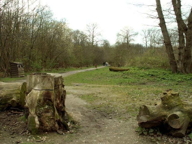 Norsey Woods, Billericay, Essex