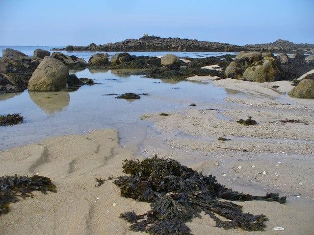 Oyster-beach