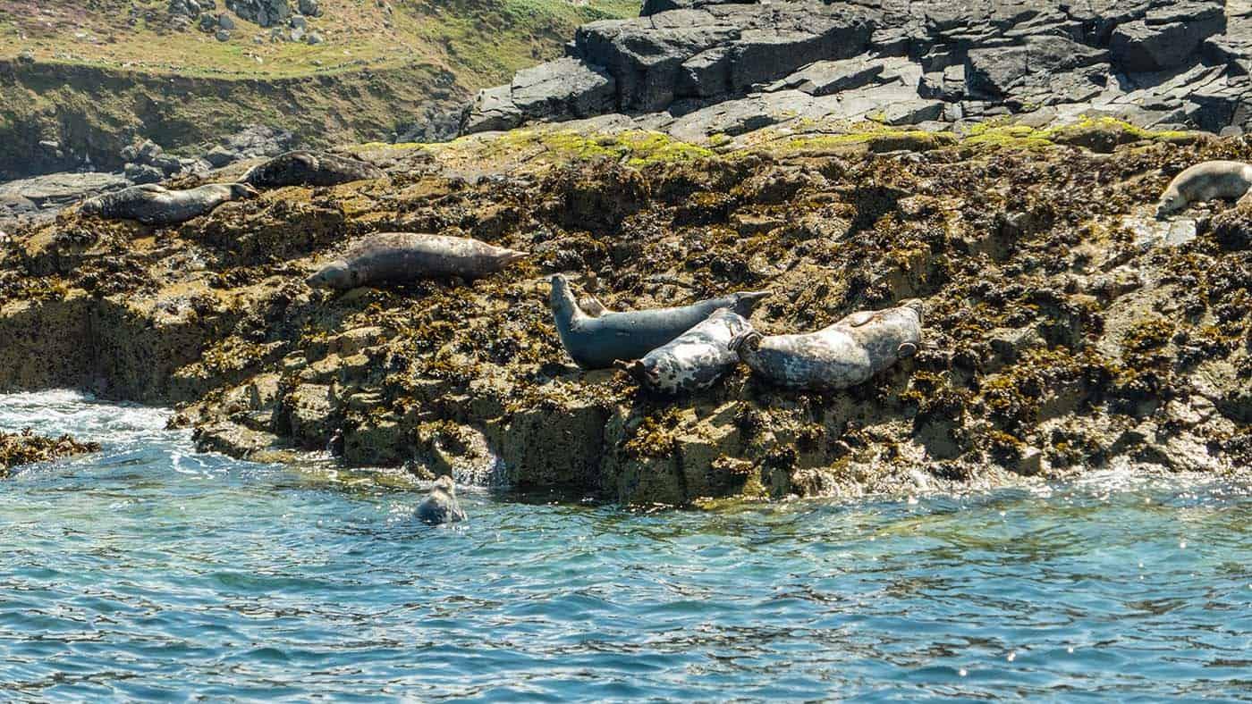 Seal-Island-1000490