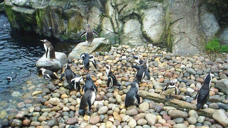 Penguin Bristol Zoo 768x432